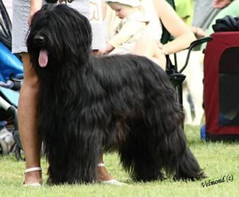 erwartete größe hund